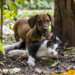 Flea & Tick Prevention: Littleton, Colorado | Distinctive Pet Care
