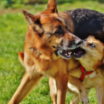 Leash Laws and Off-leash Dog Attacks | Dog Walker Littleton, CO