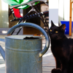 Free Pet Sitting Extras | Distinctive Pet Care