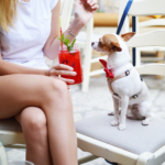 Dog-Friendly Places in the Denver Metro Area | Distinctive Pet Care